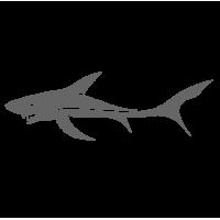 0426. Акула