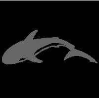 0429. Акула